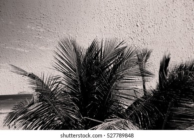 Abstract caribbean palm tree leaves in motion. Black leaves in retro style moving in summer wind on tropical beach, ideal for travel blog, design template, magazines. Image with graffiti filter effect