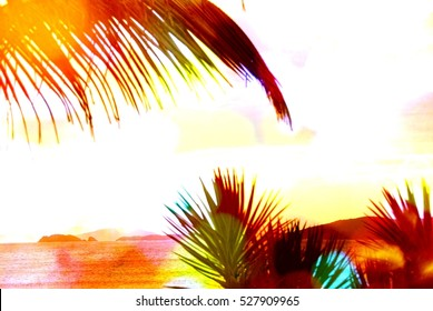 Abstract caribbean palm tree leaves in motion. Colorful retro style branches moving on tropical beach, ideal for travel blog, design template, print magazine. Image with rainbow color filter effect