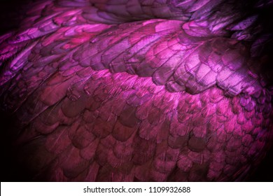 Abstract of Chicken feather pink color as the background.
