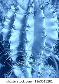 Abstract Close Up of Cactus Succulent with Large Spikes