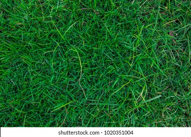 Abstract close up green grass fresh nature background top view