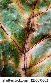 Abstract Close Up of Tree Leaf