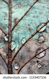 Abstract closeup detail of a decaying turquoise and brown autumn leaf with water droplets