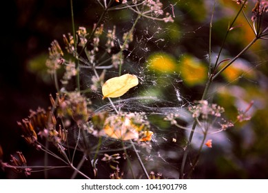 Abstract closeup view of leaf entangled in spider's web on delicate fragile plant's twigs. Bokeh flowers background, outdoors scenery. Little wonders in the garden or meadow. Falling leaf trapped.