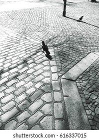 Abstract cobbled street pavement with birds in Berlin