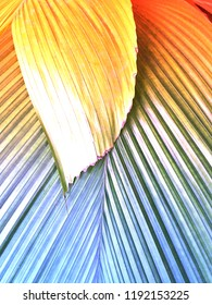Abstract color clashing background texture of a close up palm leaf with an orange blue gradient