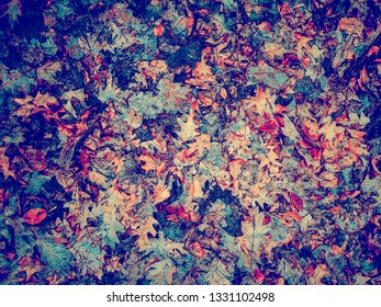 abstract colorful background made of fallen leafs