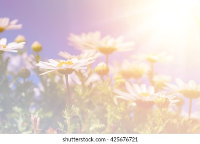 Abstract colorful Beautiful White daisy flower with sky blue background.