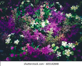 Abstract colorful flowers and dark background