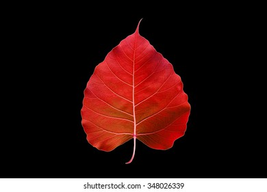 abstract colorful red leaf, isolated on black background
