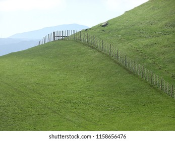 Abstract composition showing fence line on lush farmland cutting a graceful line across contours of hill in Belmont Regional Park near Lower Hutt New Zealand