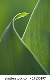 Abstract curled leaf