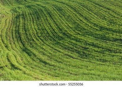abstract curves of a background grassy