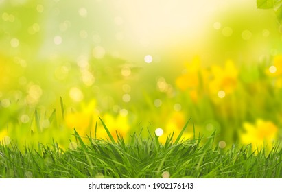 Abstract daffodils and narcissus in beautiful natural landscape in summer, easter and spring.
