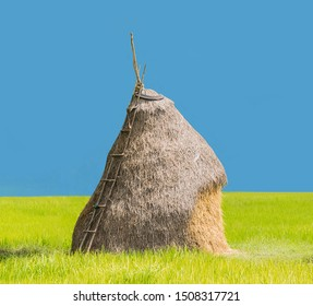 abstract dai cut some part of stack, straw, farmer to keep animal feed with green paddy rice field and the blue background.