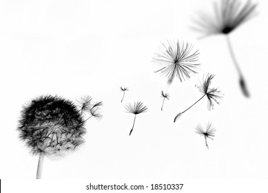 Abstract dandelion with seeds floating away