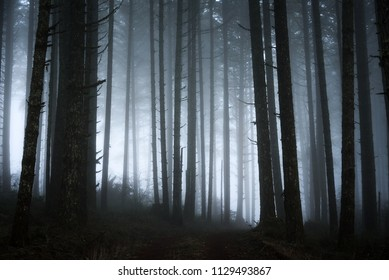 abstract dark forest with fog, spooky forest scene