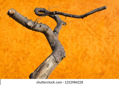 Abstract dead bare tree in front of a beautiful old red brown orange rust plaster Moroccan tadelakt background.