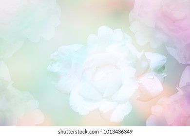 Abstract defocused soft pastel roses flower background