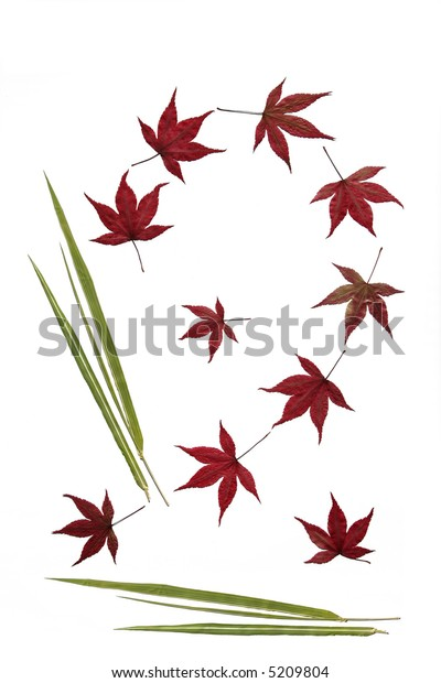 Abstract design of maple and bamboo leaves against a white background.