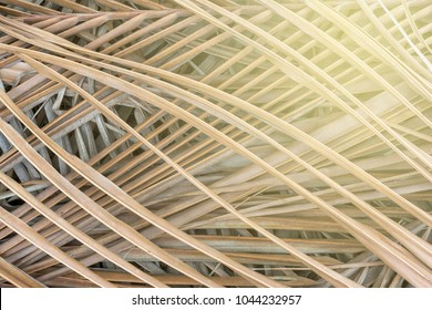 Abstract dried coconut leaves