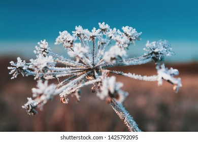 abstract dry flower in winter, against clear blue sky