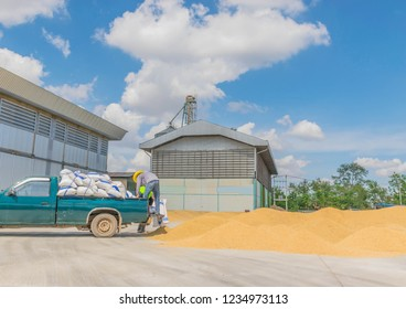 Abstract dry method of brown paddy rice seed, how to oven heat the brown paddy rice seed, how to containment rice seed in the rice mill.