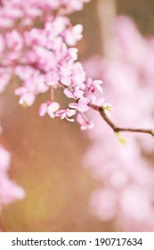 Abstract of Eastern Redbud blossoms with extreme shallow depth of field. Free space for text.