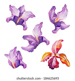 abstract exotic flowers set, watercolor illustration isolated on white background