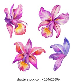 abstract exotic orchid flowers set, watercolor illustration isolated on white background