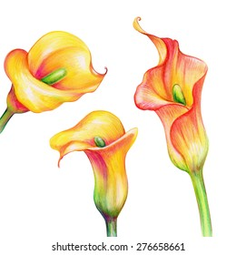 abstract exotic yellow calla flowers set, watercolor illustration isolated on white background