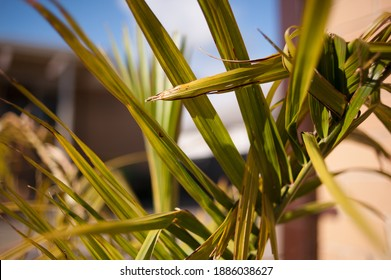 Abstract Fern background with blue sky