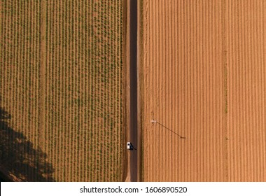 Abstract fields top down view. DRONE view from above of rows of sugar cane planted on farm, trees, green forest, road, valley. Green and orange. Shot in Walsh's pyramid, Carins, Australia.