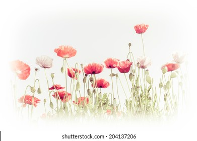 Abstract floral background in vintage style for greeting card. Wild poppy flowers on summer meadow. Watercolor painting effect