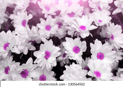 abstract flower background. flowers made with color filters. purple flowers.