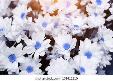abstract flower background. flowers made with color filters. blue daisy.