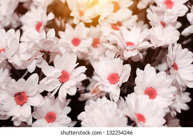 abstract flower background. flowers made with color filters. red flowers.