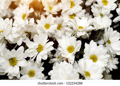 abstract flower background. flowers made with color filters. yellow flowers.