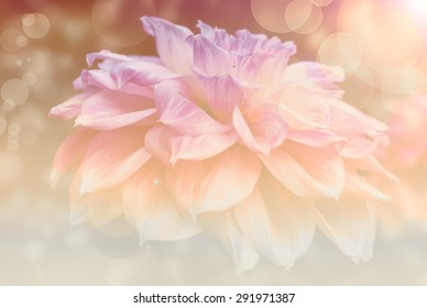 abstract flower dahlia background,bokeh ,flowers made with color filters in the wonderful sunset light with lense flares