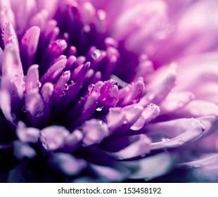 abstract flower macro