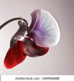 abstract flower, textured petals, abstract composition.