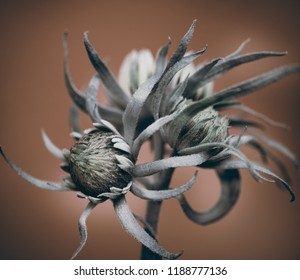 abstract flower, wild flower on a brown background.