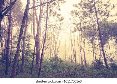Abstract forest in the mist, vintage color