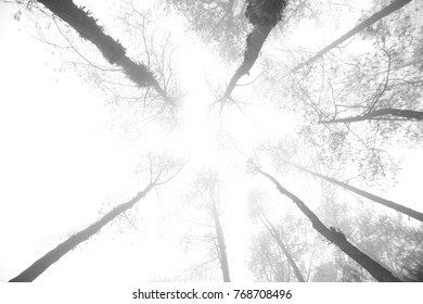 Abstract forest photo with monochrome black and white trees