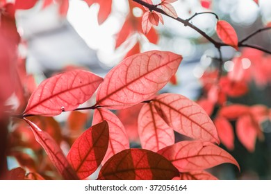 abstract fresh new red  leaves glowing in green forest focus , select focus
