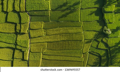 Abstract geometric shapes of agricultural parcels in green color.