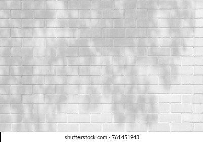 Abstract gray shadow background of natural leaves tree branch falling on white brick wall texture for background and wallpaper, black and white tone