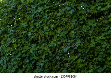 Abstract of green background in spring season at the park