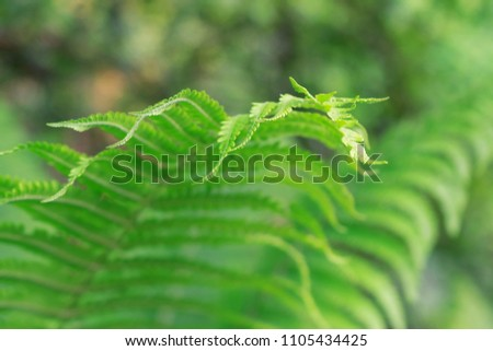 Abstract green blurred background of a fern leaf
