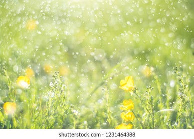 Abstract green bokeh background. Fresh green background with abstract blurred foliage and bright summer sunlight and central copyspace for your text or advertisment
